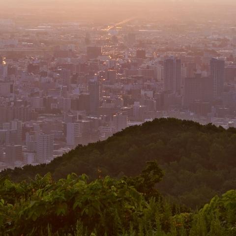 札幌の街を一望できる幌見峠ラベンダー園